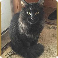 Adopt A Pet :: Loki - Valley City, ND