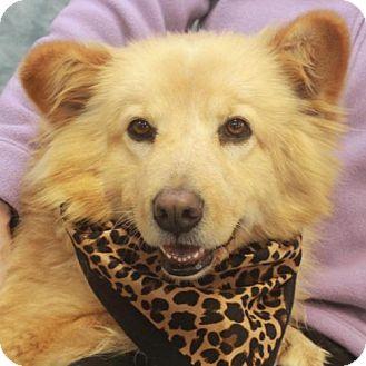 Canine Lifeline Adoptable Dogs