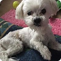Adopt A Pet :: Axl - Doylestown, PA