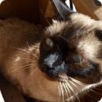 Adopt A Pet :: CATSEROLE - San Antonio, TX