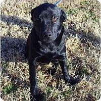 Adopt A Pet :: Gracie - Whitehouse, TX
