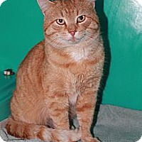 Adopt A Pet :: Tom - Attica, IN
