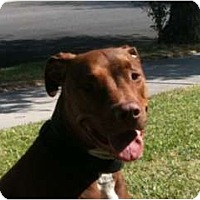Adopt A Pet :: Charlie - Lake Forest, CA