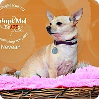 Adopt A Pet :: Nevaeh - Shawnee Mission, KS