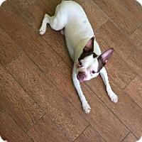 Adopt A Pet :: LUCAS - Weatherford, TX
