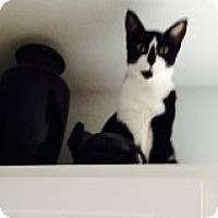 Adopt A Pet :: Diamond - Bridgeton, MO