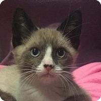 Adopt A Pet :: Juniper - Bellevue, WA