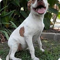 Adopt A Pet :: Liberty - Tyler, TX