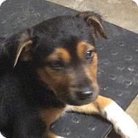 Adopt A Pet :: Zoe - Buffalo, NY