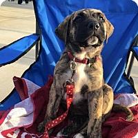 Adopt A Pet :: Lila - Uxbridge, MA