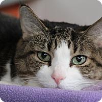 Adopt A Pet :: Barkers - Sarasota, FL