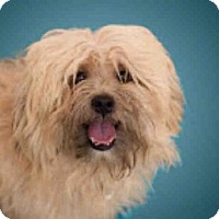 Adopt A Pet :: *NORMAN - Upper Marlboro, MD