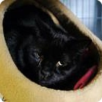 Adopt A Pet :: Zappa - New Milford, CT