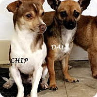Adopt A Pet :: CHIP AND DALE - Gustine, CA