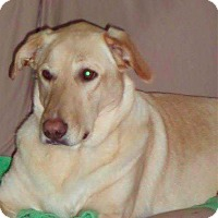 Adopt A Pet :: Heidi - Brunswick, OH