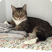 Adopt A Pet :: Mimi - Jersey City, NJ