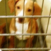 Adopt A Pet :: Stella - Goodlettsville, TN