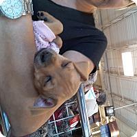 Adopt A Pet :: Tinker - Pompano Beach, FL