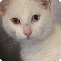Adopt A Pet :: Marco - Germantown, MD