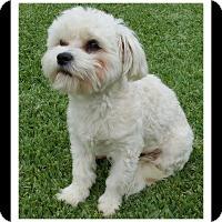 Adopt A Pet :: AUGGIE - Winchester, CA