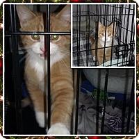 Adopt A Pet :: Leo - Cedar Springs, MI