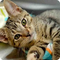 Adopt A Pet :: TEDDY - West Palm Beach, FL