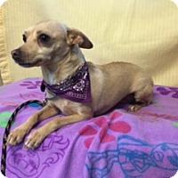 Adopt A Pet :: LOTTIE - Elk Grove, CA