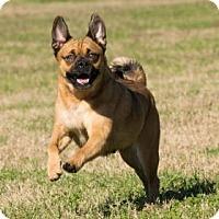 Adopt A Pet :: Zoey - Santa Fe, TX