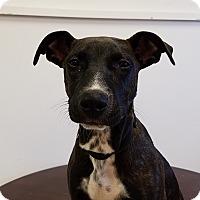 Adopt A Pet :: KiKi - Elyria, OH