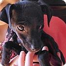 Adopt A Pet :: Asta