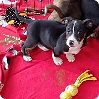 Adopt A Pet :: BIG JUNE - Canton, GA