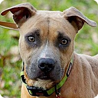 Adopt A Pet :: Kale - Houston, TX