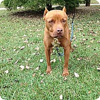 Adopt A Pet :: Pachino - Conyers, GA