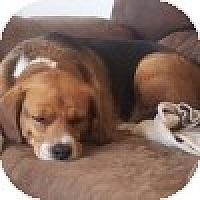 Adopt A Pet :: Madison - Novi, MI