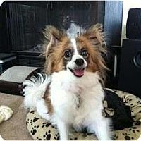 Adopt A Pet :: Aria - Hilliard, OH