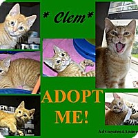 Adopt A Pet :: Clem - Xenia, OH