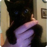 Adopt A Pet :: Bobblehead - Davis, CA