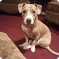Adopt A Pet :: angel - North Brunswick, NJ