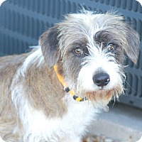 Adopt A Pet :: Chevy Chase - Woonsocket, RI
