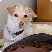 Adopt A Pet :: Murphy - Lovely Boy / VIDEO - Los Angeles, CA