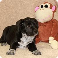 Adopt A Pet :: This - Salem, NH