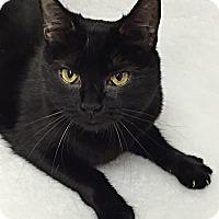 Adopt A Pet :: Effie - Mission Viejo, CA