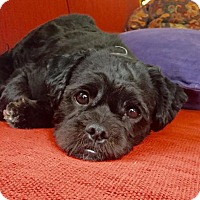 Adopt A Pet :: Cole-ADOPTION PENDING!! - Rockville, MD