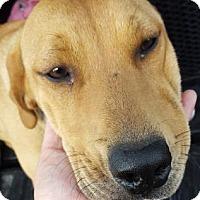 Adopt A Pet :: Shelly - Fresno CA, CA