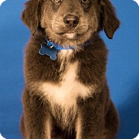 Adopt A Pet :: Benjamin - Berkeley Heights, NJ