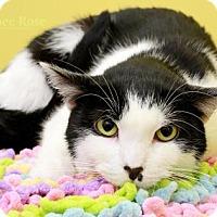 Adopt A Pet :: Suzie - Sterling Heights, MI