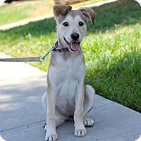 Adopt A Pet :: Alaska - San Diego, CA