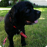 Renton Wa Dog Adoption