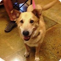 Adopt A Pet :: Babe - Dawson, GA