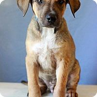 Adopt A Pet :: Melba Toast - Waldorf, MD